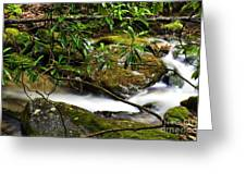 Rhododendron And Waterfall Greeting Card