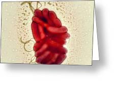 S. Maltophilia Bacteria, Tem Greeting Card