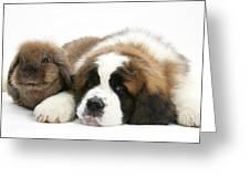 Saint Bernard Puppy With Rabbit Greeting Card