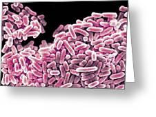 Salmonella Bacteria, Sem Greeting Card