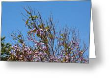 Saucer Magnolia Or Tulip Tree Magnolia X Soulangeana Greeting Card