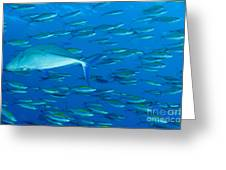 School Of Wide-band Fusilier Fish Greeting Card