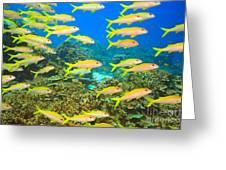 School Of Yellowfin Goatfish Greeting Card