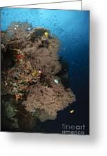 Sea Fans, Fiji Greeting Card