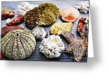 Sea Treasures Greeting Card