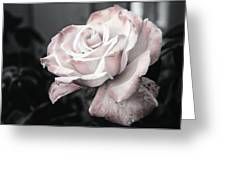 Secret Garden Rose Greeting Card