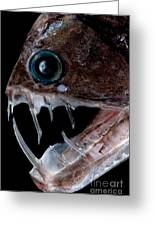 Sloanes Viperfish Greeting Card