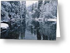 Snow-covered Trees Reflected Greeting Card