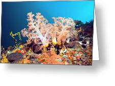 Soft Coral On A Reef Greeting Card