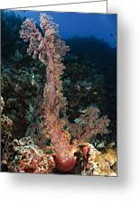 Soft Coral Seascape, Indonesia Greeting Card
