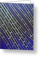 Spirogyra Algae, Light Micrograph Greeting Card