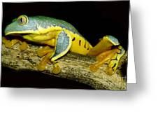 Splendid Leaf Frog Greeting Card