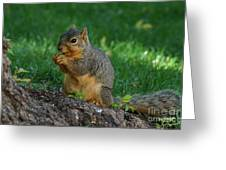 Squirrel Eating Greeting Card