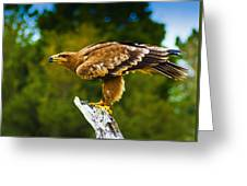 Steppe Eagle Greeting Card