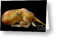 Stubby Squid Greeting Card
