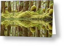 Swamp Greeting Card by David Nunuk