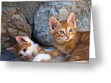 Sweet Cats Greeting Card