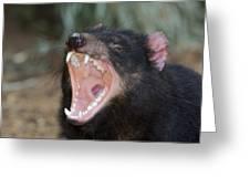 Tasmanian Devil Greeting Card by Tony Camacho