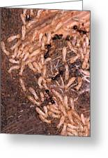 Termite Nest Reticulitermes Flavipes Greeting Card