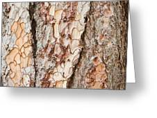 Tree Bark Greeting Card
