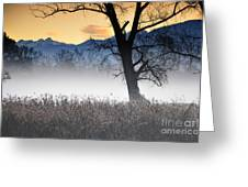 Trees With Fog Greeting Card