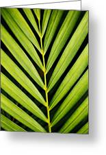Tropical Palm Frond Greeting Card