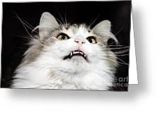 Vampire Cat Greeting Card