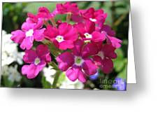 Verbena From The Ideal Florist Mix Greeting Card