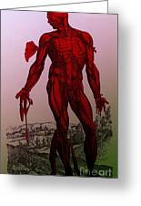 Vesalius De Humani Corporis Fabrica Greeting Card by Science Source