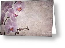 Vintage Orchids Greeting Card by Jane Rix
