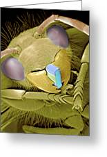 Wasp With Microchip, Sem Greeting Card