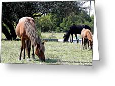 Wild Spanish Mustang Foal Greeting Card