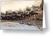 Wildebeest Before The Crossing Greeting Card