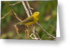 Wilson's Warbler Greeting Card