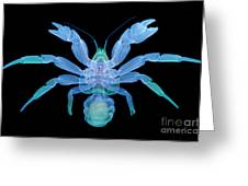 X-ray Of Coconut Crab Greeting Card