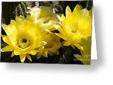 Yellow Cactus Flowers Greeting Card