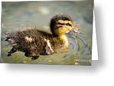 Young Duck Greeting Card