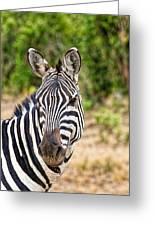 Zebras In The Masai Mara Greeting Card
