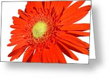 2006a2 Greeting Card