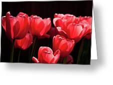 2012 Tulips 02 Greeting Card
