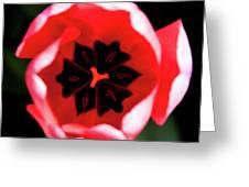 2012 Tulips 03 Greeting Card
