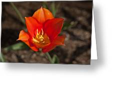 2012 Tulips 10 Greeting Card