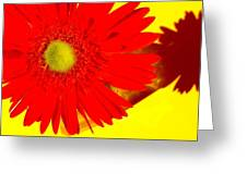 2024a2-002 Greeting Card