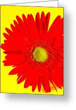 2024a2-005 Greeting Card