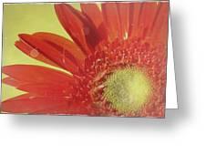 2026a5-003c Greeting Card