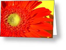2026a5-004 Greeting Card