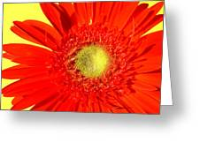 2026a5-008 Greeting Card