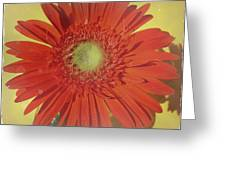 2026a6 Greeting Card