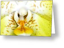 Exotic Orchids Of C Ribet Greeting Card