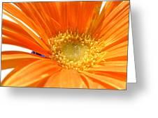 2106zc-005 Greeting Card